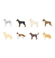 dog breeds icons in set collection for designdog vector image