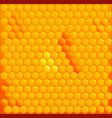 honey cells vector image vector image