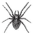 spider vintage vector image vector image