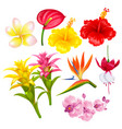 tropical exotic flowers set vector image vector image