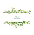 Watercolor banner of mint branches isolated