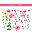 Watercolor floral collection vector image vector image