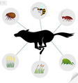 Infographics dangerous insects and plants that vector image