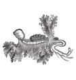 Parasitic isopod vintage