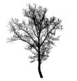 beautiful tree silhouette icon vector image vector image