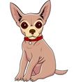 chihuahua cartoon vector image vector image
