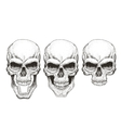 One skull in different guises vector image vector image