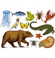 set of animals reptile amphibian mammal insect vector image