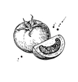 Tomato drawing Isolated tomato and sliced vector image vector image