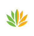 lotus flower beauty color logo vector image vector image