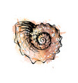 sea shell from a splash watercolor hand drawn vector image