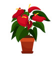 anthurium houseplant in flower pot vector image vector image