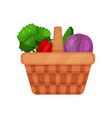 picnic basket full of fresh vegetables red cabbage vector image