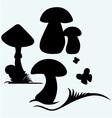 Boletus Edulis and mushroom Amanita vector image vector image