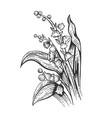 convallaria flower sketch engraving vector image vector image