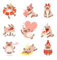 cute funny pug dog adorable beige pet animal vector image vector image