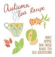 Delicious autumn tea recipe vector image vector image