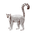 hand drawn lemur isolated on white background vector image vector image