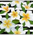 tropical seamless pattern with plumeria flowers vector image