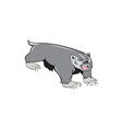 Badger Pouncing Cartoon vector image vector image