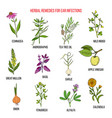best medicinal herbs for ear infections vector image vector image