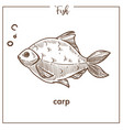 carp sketch fish icon vector image vector image