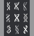 dna macromolecule human individual genetic code vector image