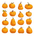 pumpkin vegetable icons autumn squash or gourd vector image vector image