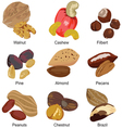 set of different nuts vector image