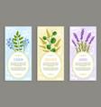 lavender and olibanum set vector image vector image