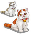 cute thick spotted cat with a collar vector image