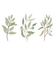 hand drawn organic style seeded eucalyptus leaves vector image vector image