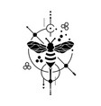 honey bee image vector image