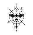 honey bee image vector image vector image