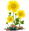 yellow flowers and rocks on white background vector image vector image