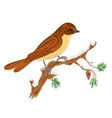 Bird on a branch of pine Christmas motive vector image