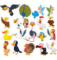 cartoon bird collection set vector image