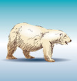 Color sketch of a polar bear vector image vector image