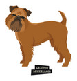 dog collection griffon bruxellois isolated object vector image vector image