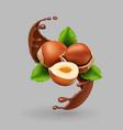 hazelnut and chocolate realistic splash vector image vector image