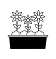 potted flowers nature vector image
