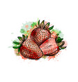 strawberry sweet fruit from a splash of vector image