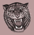Tiger drawing vector image vector image