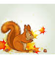 Autumn background with red fluffy squirrel vector image vector image