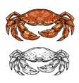 crab animal sketch sea shellfish or crustacean vector image vector image