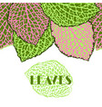 seamless border with decorative leaves natural vector image vector image