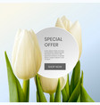 special offer beautiful tulips bouquet vector image vector image