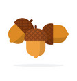three acorns flat isolated vector image