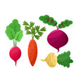 beetroot and radish set icons vector image vector image