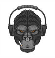 gorilla headphone cigar vector image vector image